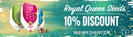 Offer Royal Queen Seeds